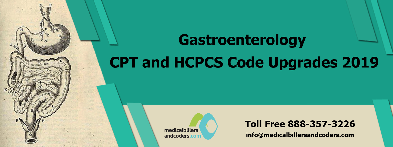 Gastroenterology CPT and HCPCS Code Upgrades 2019